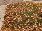 Fallen leaves in Glenwood Springs